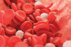 Diplomado en hematología
